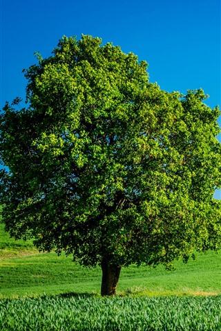 iPhone Wallpaper Lonely tree, green fields, summer