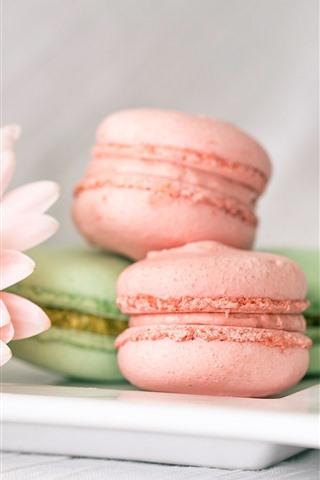 iPhone Wallpaper Macaron, pink gerbera