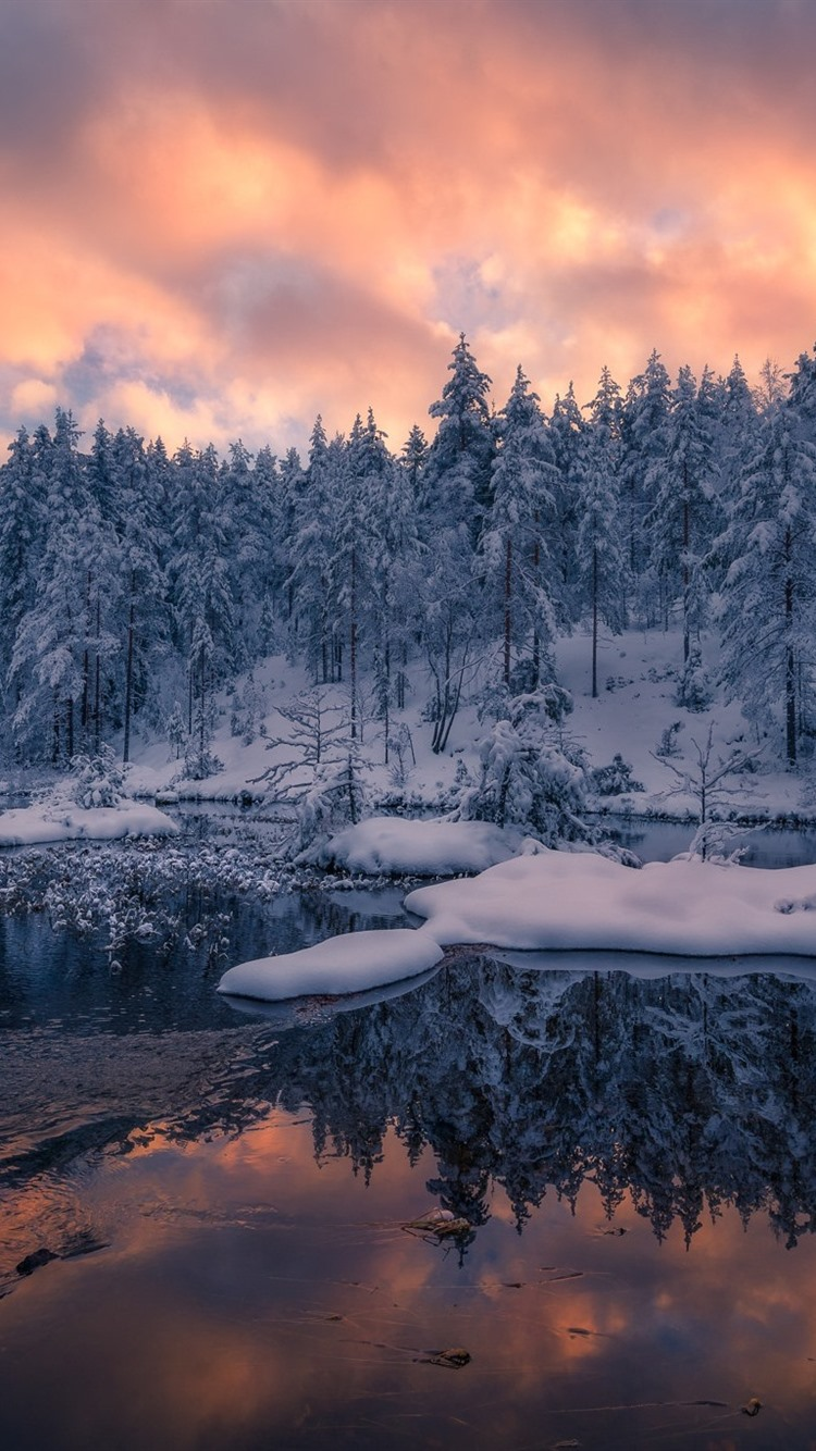 Norway Trees Winter Snow Sunset 750x1334 Iphone 8 7 6 6s