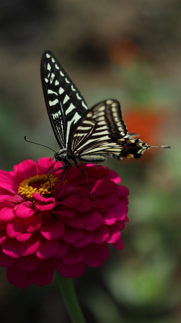 Wallpaper Pink flower, black butterfly, spring 5120x2880 ...
