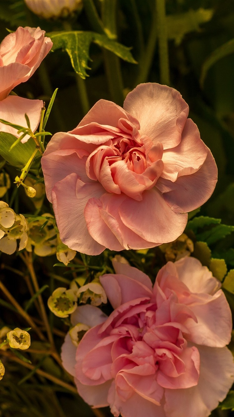 Pink Roses And Other Flowers 750x1334 Iphone 8766s Wallpaper