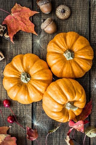 iPhone Wallpaper Pumpkin, acorns, still life