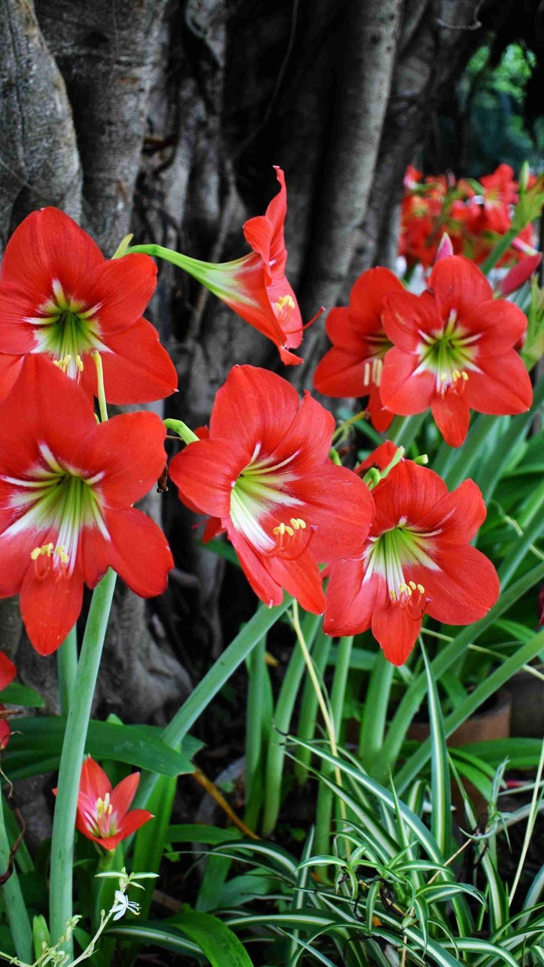 Rote Orchidee Blumen 1080x1920 Iphone 8 7 6 6s Plus