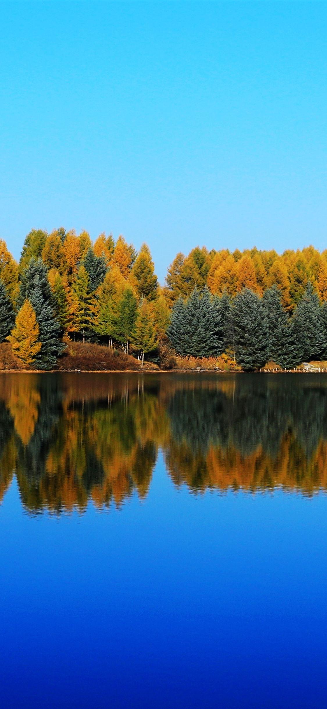 Saihanba Shenlongtan Trees Lake Water Reflection Autumn 1125x2436 Iphone 11 Pro Xs X Wallpaper Background Picture Image