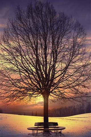 iPhone Wallpaper Trees, bench, snow, sunset, winter