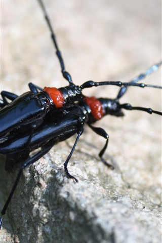 iPhone Wallpaper Two black insects