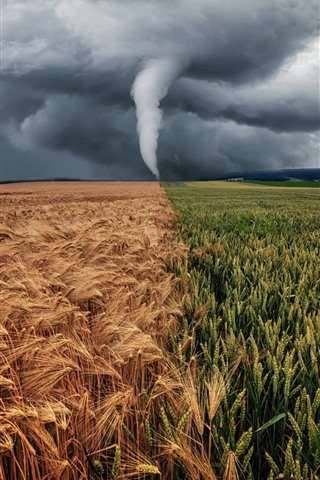 iPhone Wallpaper Typhoon, storm, fields, green and golden