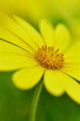 Yellow flower close up petals spring 750x1334 iphone 8766s iphone wallpaper yellow flower close up petals spring mightylinksfo