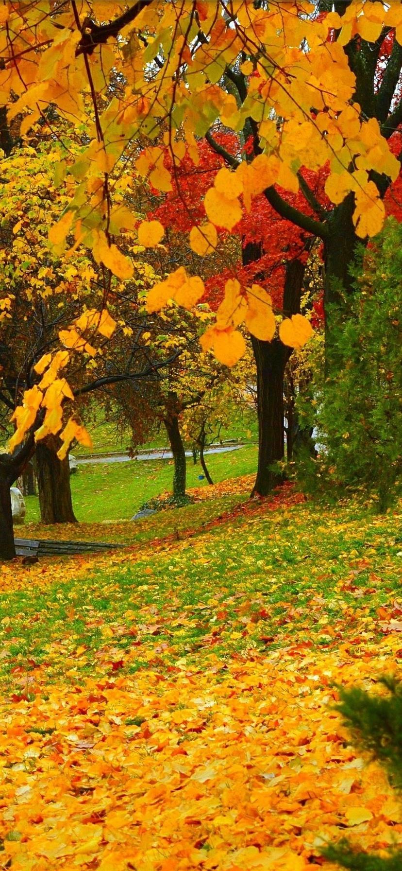 秋 公園 木々 黄色 赤い葉 828x1792 Iphone 11 Xr 壁紙 背景 画像