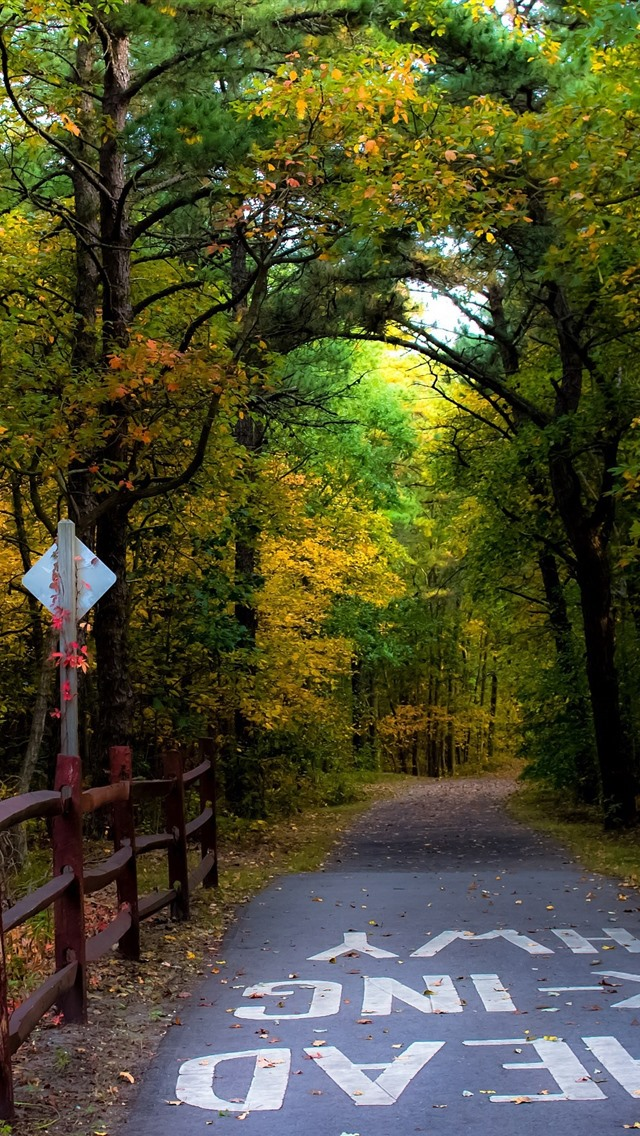 Autumn Road Trees Fence 750x1334 Iphone 8 7 6 6s Wallpaper Background Picture Image