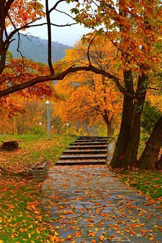 iPhone Wallpaper Autumn, trees, park, path, lamps