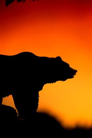 iPhone Wallpaper Bear, sunset, silhouette