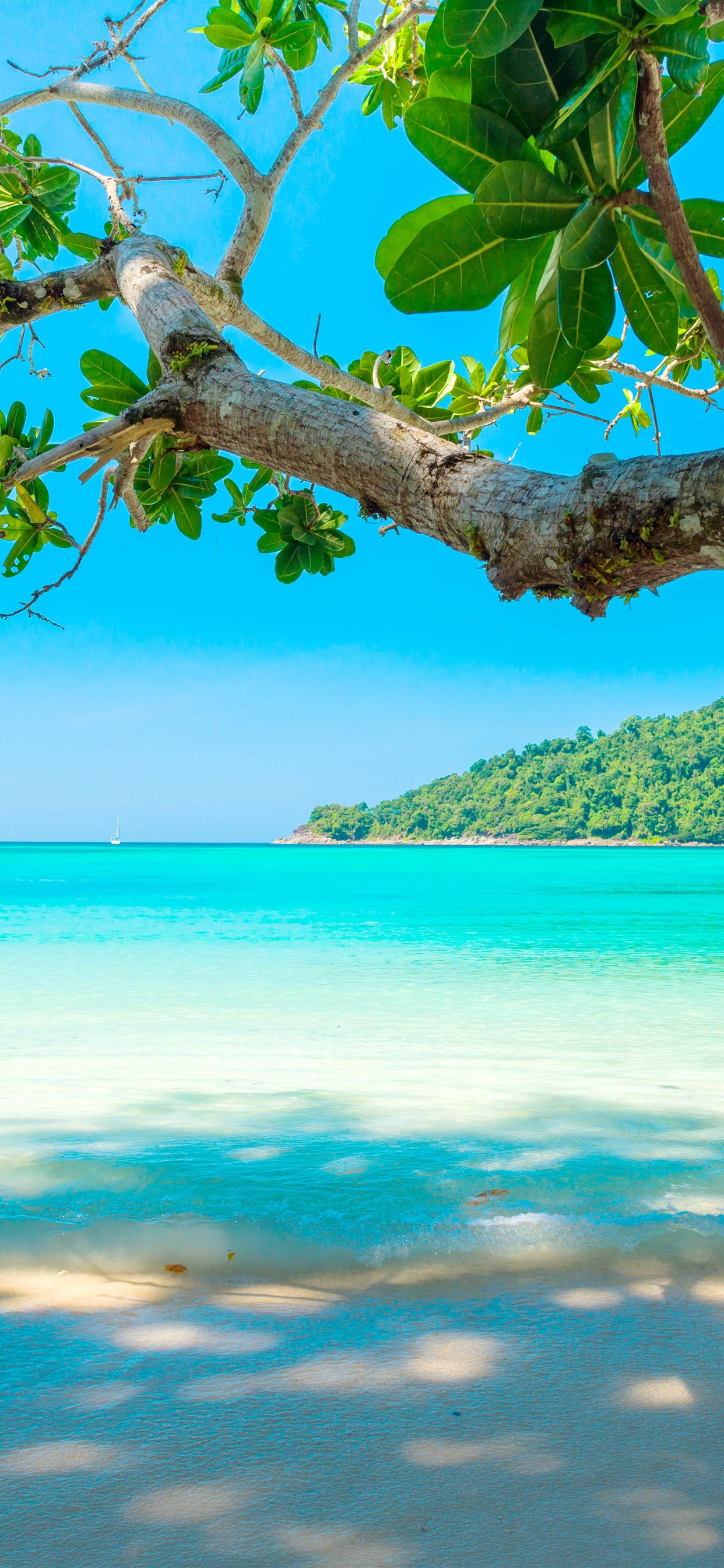 Wallpaper Beautiful Sea Beach Tree Tropical 5120x2880 Uhd