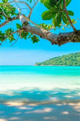 iPhone Wallpaper Beautiful sea, beach, tree, tropical