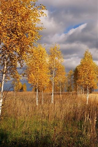iPhone Wallpaper Birch, trees, grass, autumn