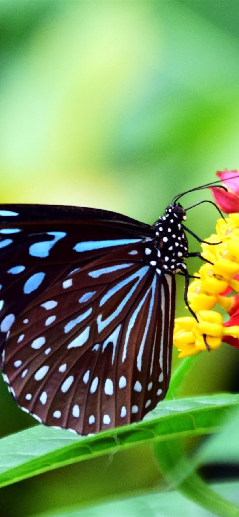 Black Wings Butterfly Flowers Green Background 828x1792