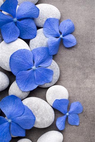 iPhone Wallpaper Blue flowers, stones, SPA