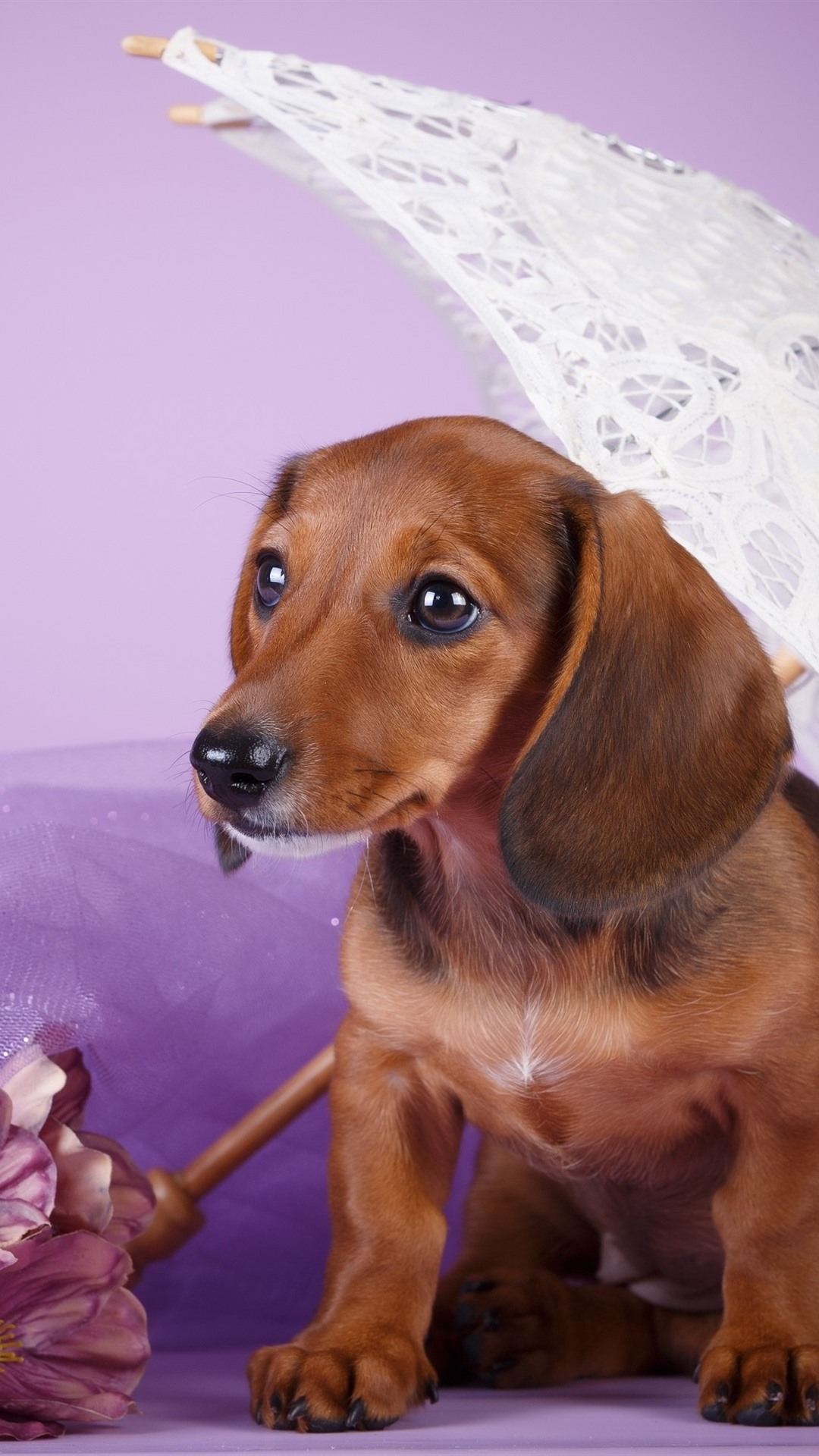 Brown Dog Dachshund Umbrella Pink Flowers 1080x1920 Iphone 8 7 6 6s Plus Wallpaper Background Picture Image