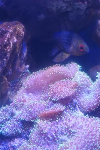 iPhone Wallpaper Coral, fish, rocks