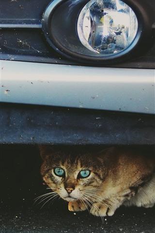 iPhone Wallpaper Cute cat under car