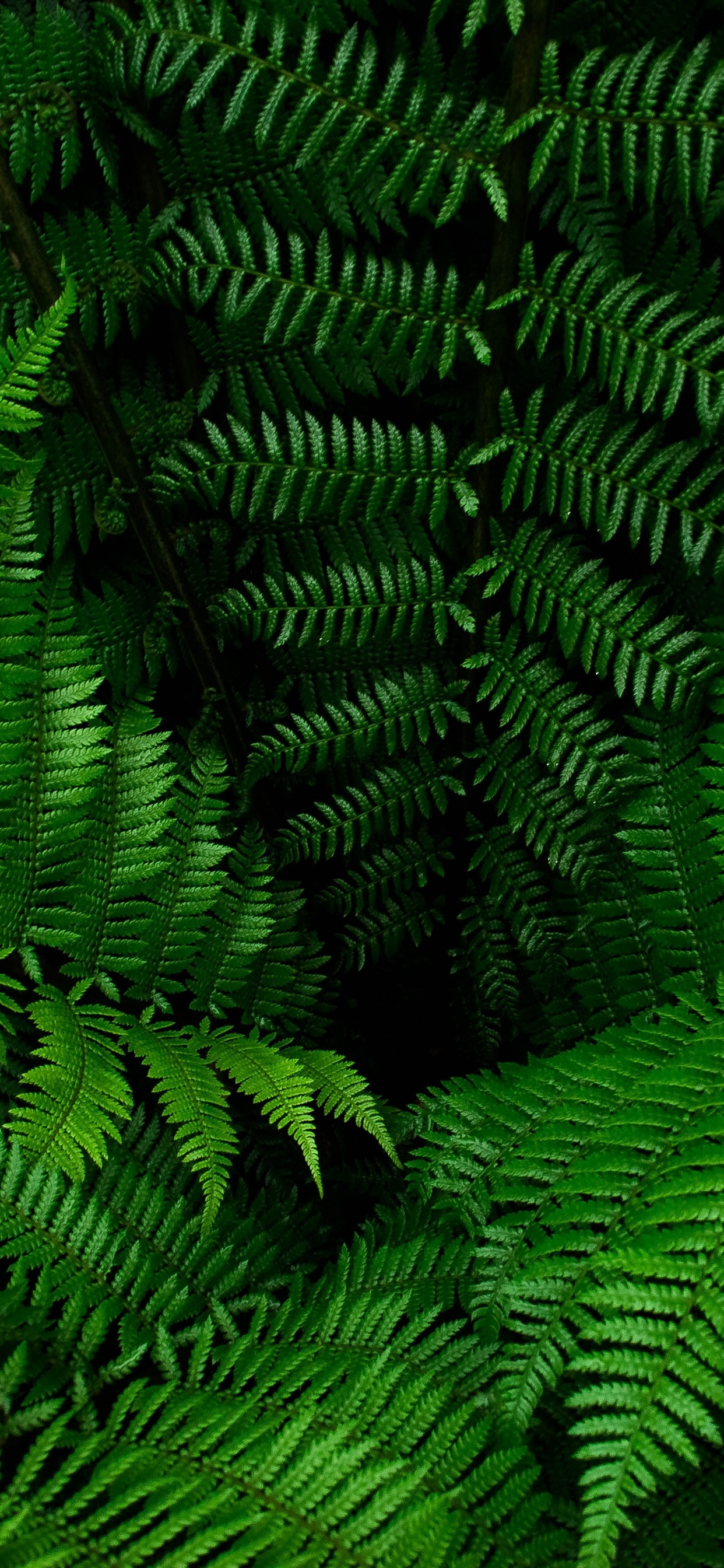 Fern Green Leaves Plants 1242x2688 Iphone Xs Max Wallpaper