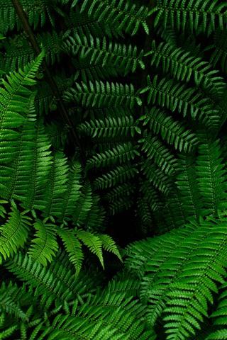 iPhone Wallpaper Fern, green leaves, plants