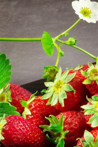 iPhone Papéis de Parede Morango fresco, flores, deliciosas frutas
