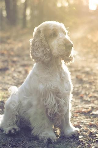 iPhone Wallpaper Furry dog, sunshine, glare
