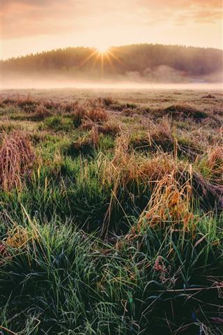 iPhone Wallpaper Grass, fog, morning