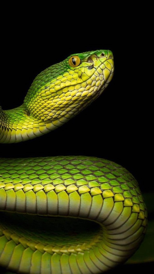 Green Snake Bend Black Background 640x1136 Iphone 5 5s 5c