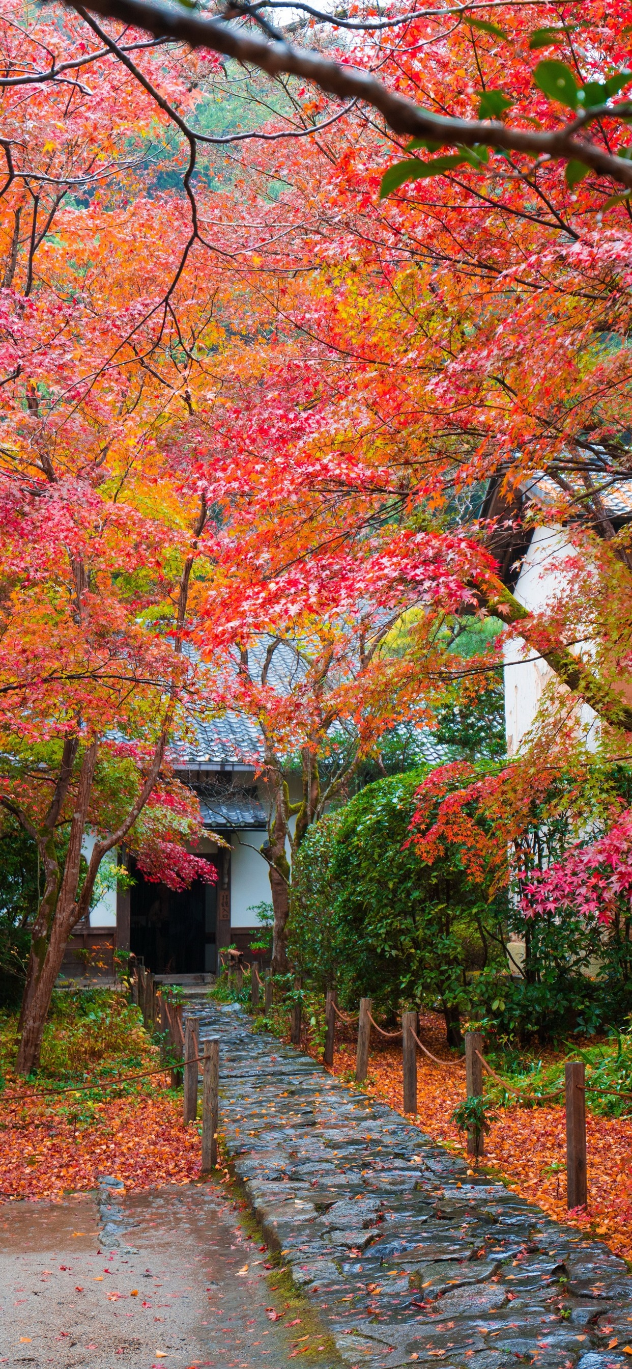 Wallpaper Japan Trees Red Maple Leaves Autumn House