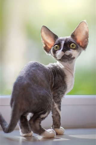 iPhone Wallpaper Kitten look back, windowsill