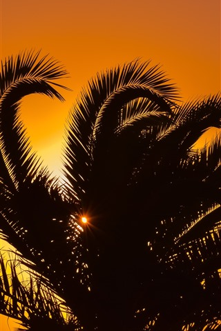 iPhone Wallpaper Palm tree, leaves, silhouette, sunset