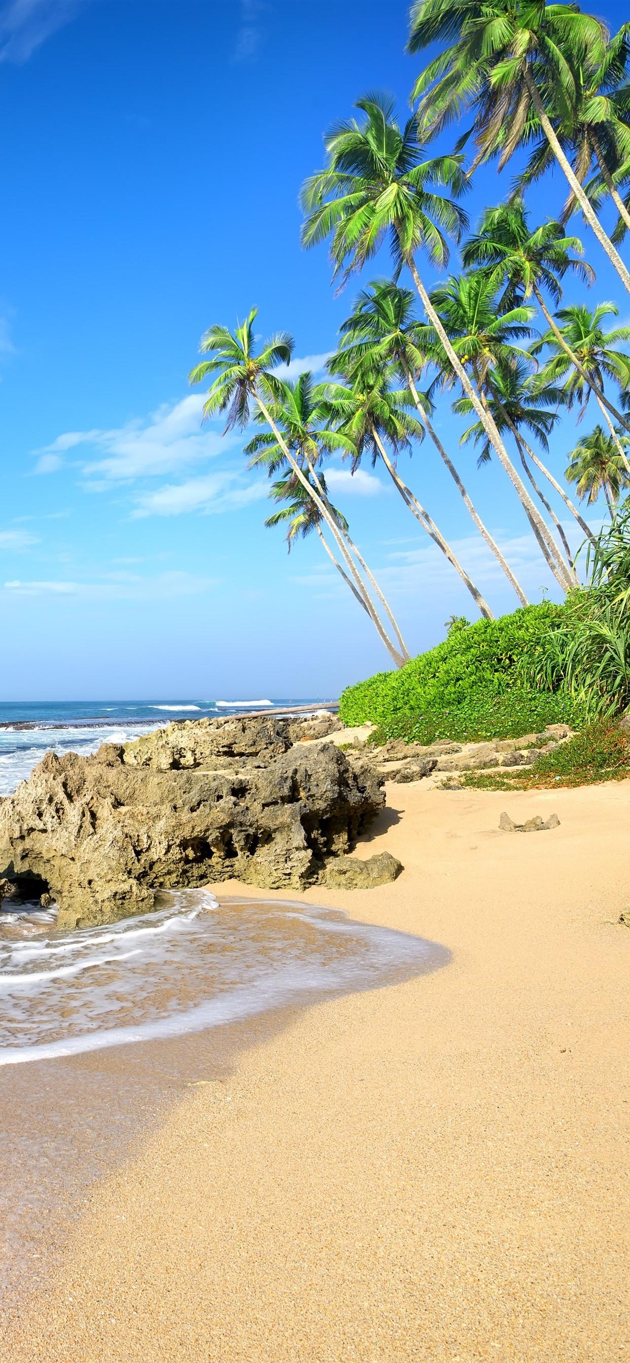 Palm Trees Beach Sea Waves Rocks 1242x2688 Iphone Xs Max