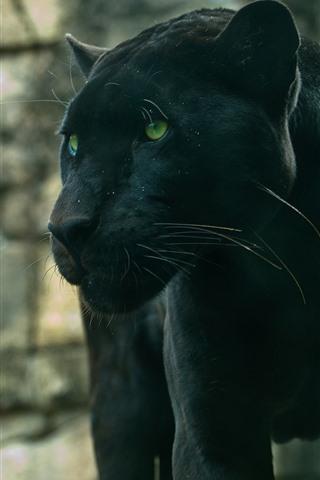 iPhone Wallpaper Panther, green eyes, wildlife