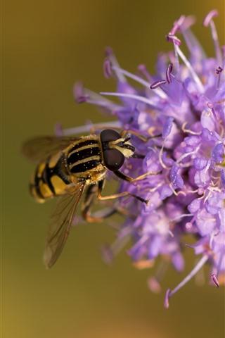 iPhone Wallpaper Purple flowers, water droplets, bee