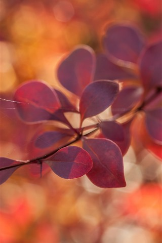 iPhone Wallpaper Red leaves, twigs, hazy, autumn