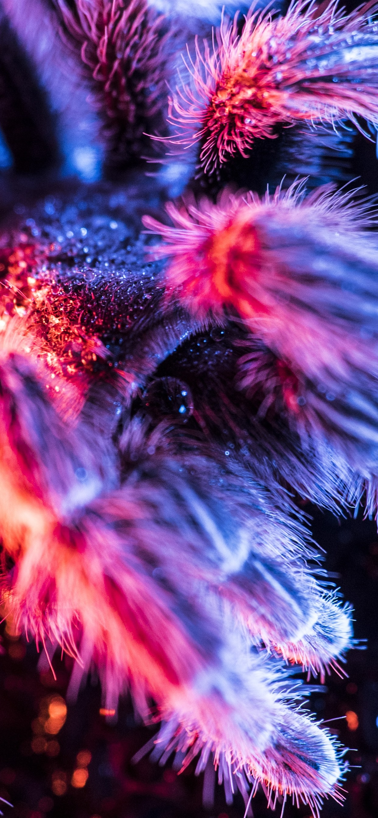 Spider Macro Photography Fluff Colorful Light 1242x2688 Iphone 11 Pro Xs Max Wallpaper Background Picture Image