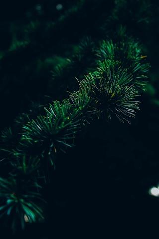 iPhone Wallpaper Spruce, needles, twigs