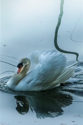 iPhone Wallpaper Swan, bird, water, pond