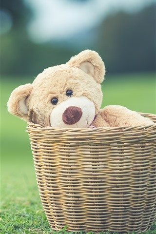 iPhone Wallpaper Teddy bear in basket, green meadow