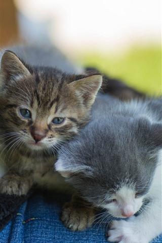 iPhone Wallpaper Three cute kittens, pet