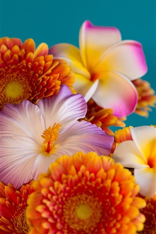 iPhone Wallpaper Three kinds flowers, gerbera, plumeria, hibiscus