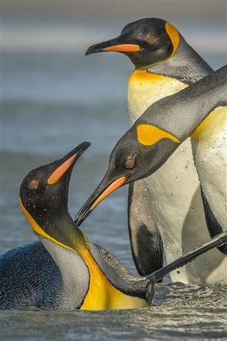 iPhone Wallpaper Three penguins standing in water