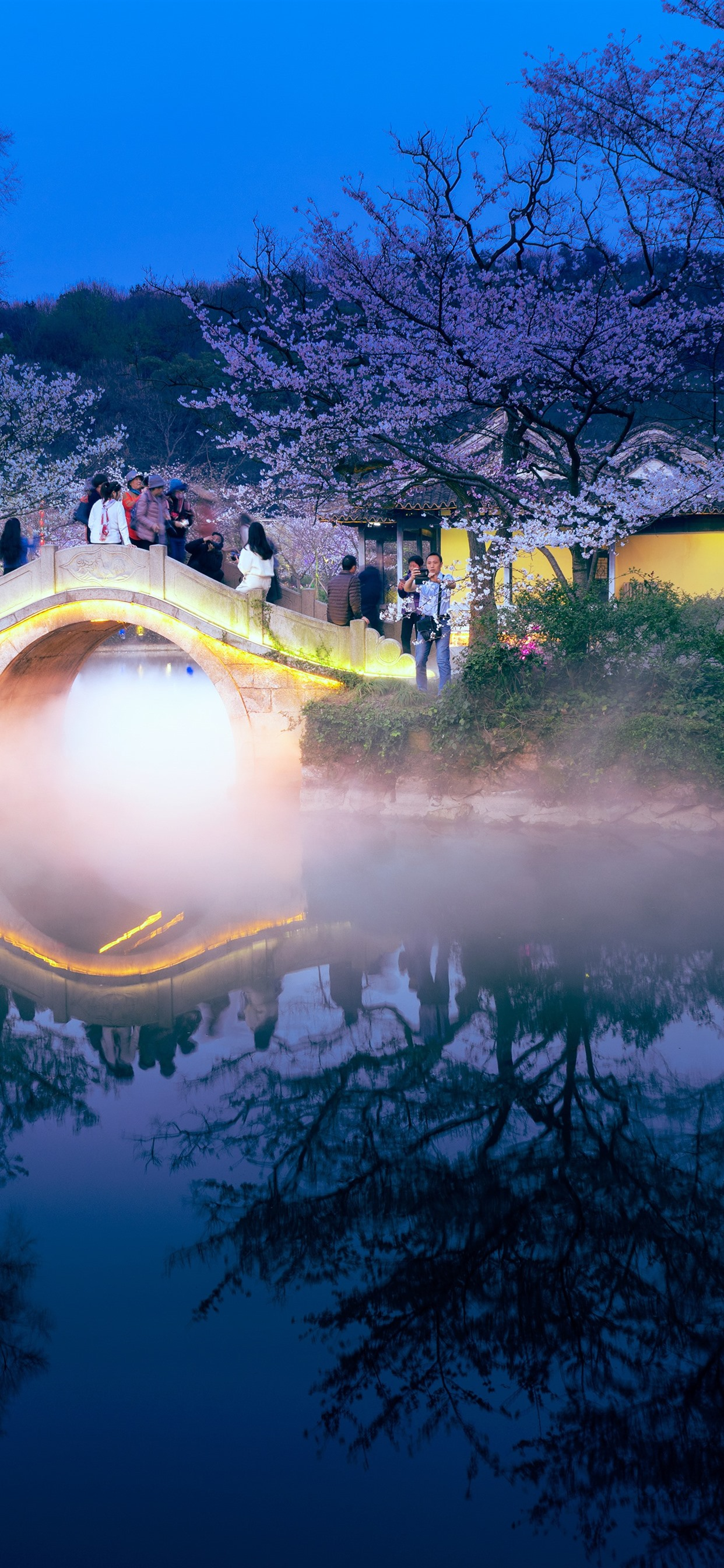 Travel China Night Bridge Sakura Lake Fog 1242x2688