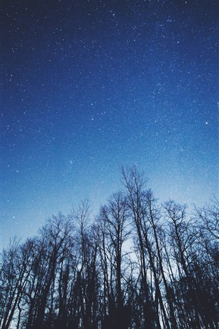 iPhone Wallpaper Trees, starry, blue sky