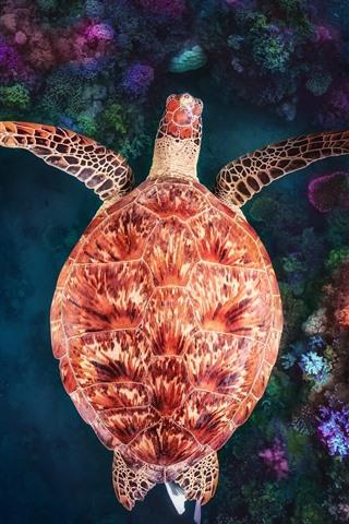 iPhone Wallpaper Turtle, underwater, coral reef