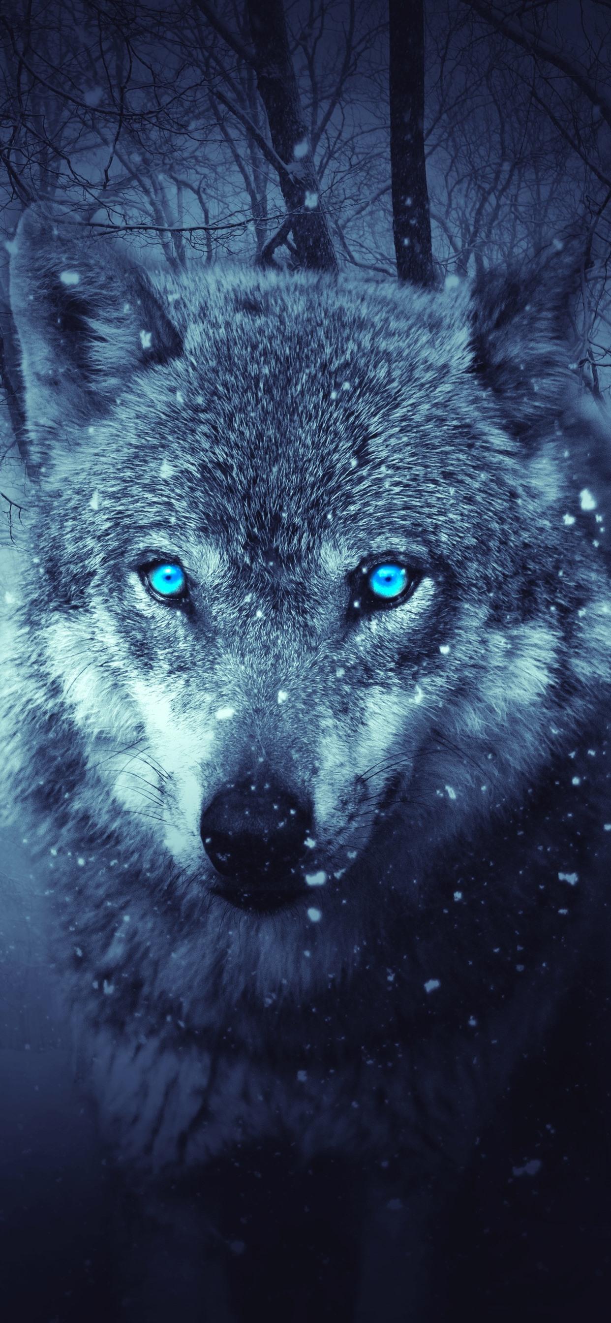 オオカミ 青い目 雪 冬 森 1242x2688 Iphone 11 Pro Xs Max 壁紙