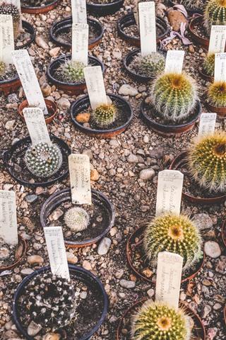 iPhone Wallpaper Cactus, houseplants