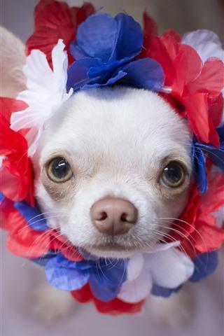 iPhone Papéis de Parede Filhote de cachorro bonito branco, olha, grinalda